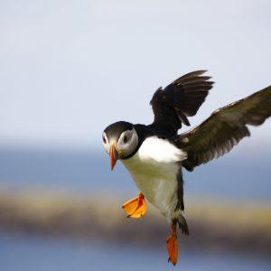 У птиц нет чувства вины
